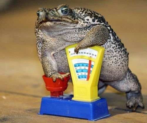 читать квак и жаб